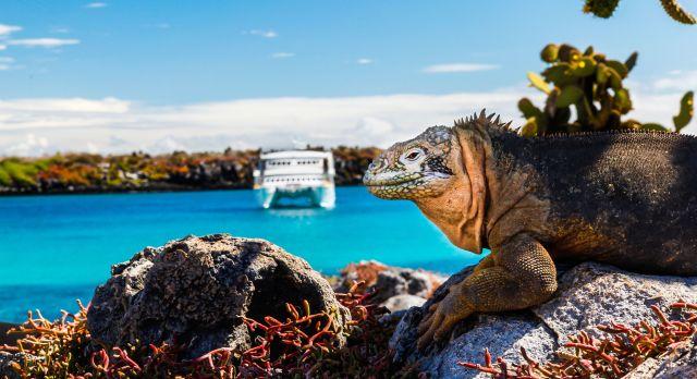 Galapagos cruise to explore the flora and fauna