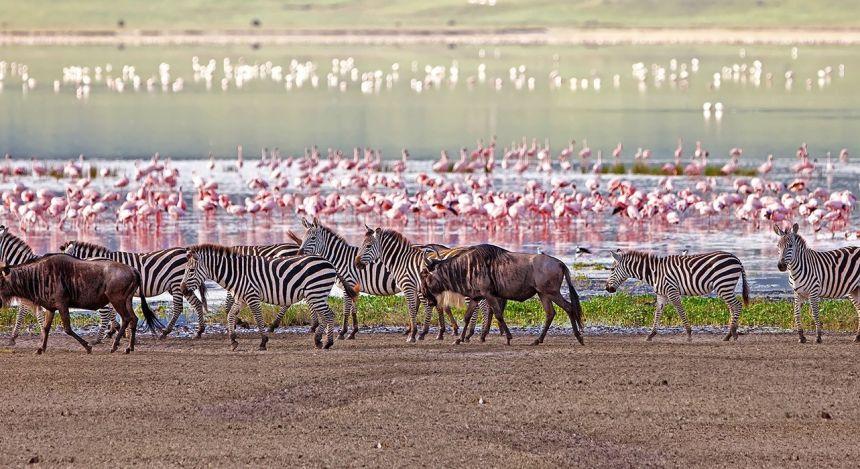Artenreichtum am See: Manyara See