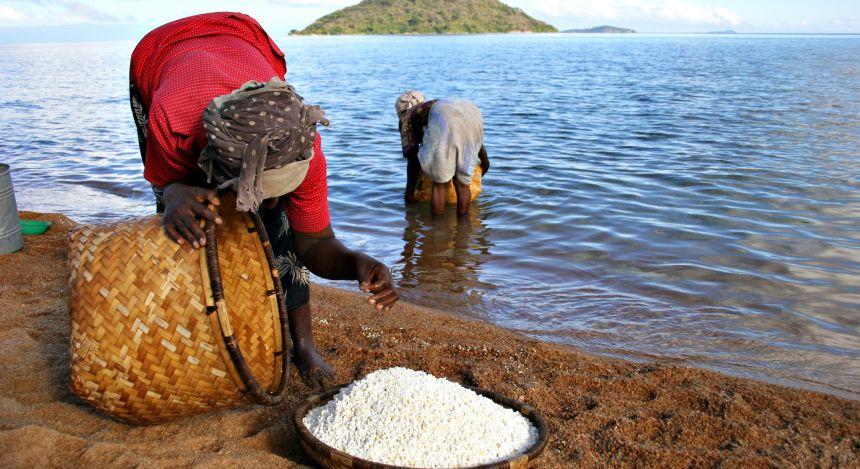 Frauen in Malawi bei der Arbeit