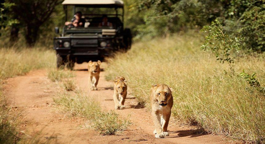 Kruger: The Best South Africa Safari Adventures