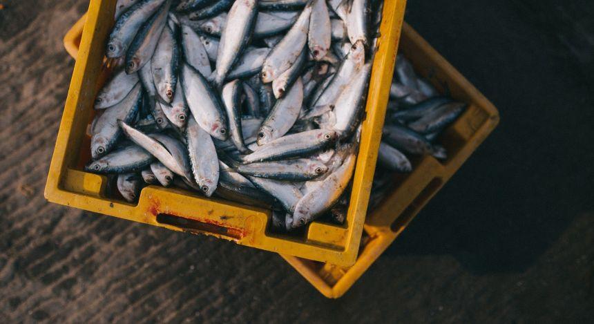 Kisten mit Fisch