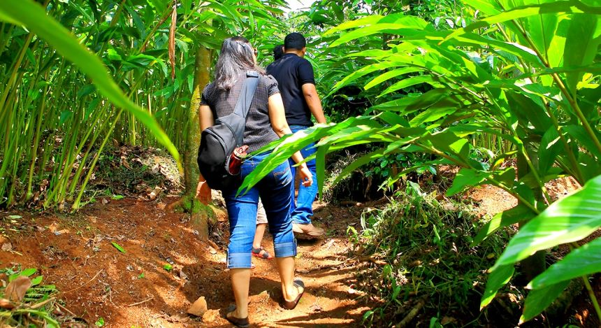 Enchanting Travels - South India Tours - Tekkady - Aanavilasam Luxury Plantation - Plantation tour