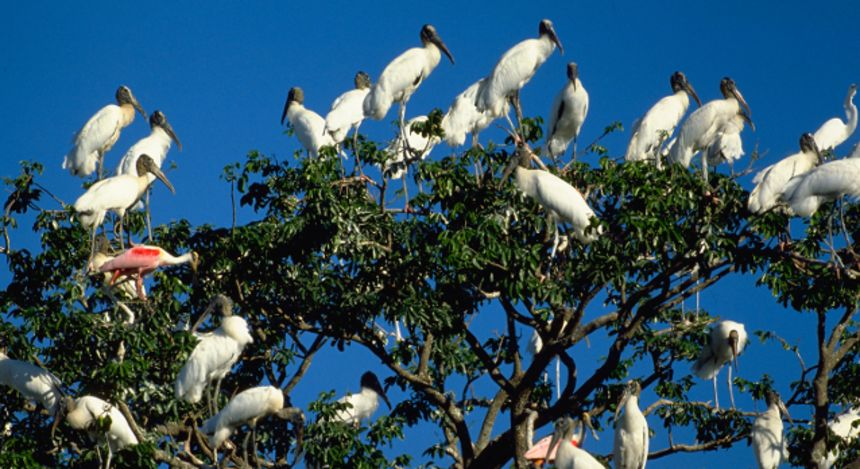 Wild and Wonderful Tours in the Brazilian Amazon