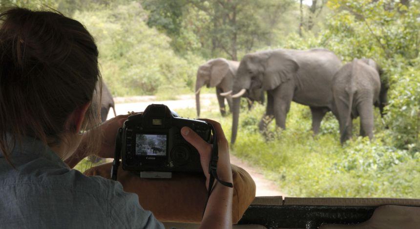 Blick aus dem Geländewagen auf Elefantenherde, Tansania