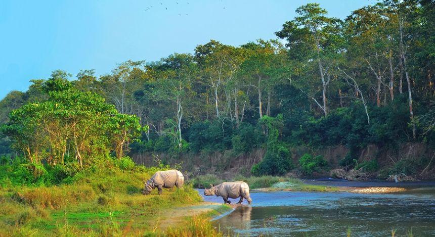 Nashörner am Ufer eines Flusses im Chitwan-Nationalpark in Nepal