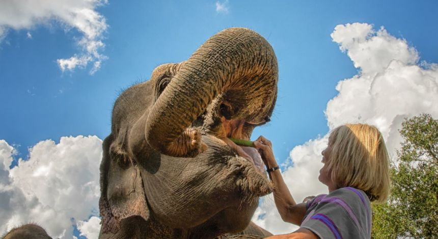 Frau füttert Elefanten