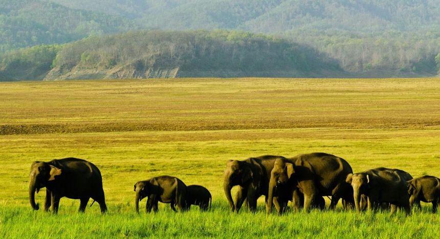 Elefantenherde zieht durch das weite Grasland