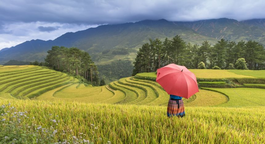 Asia Travel Deal: Rice Terraces