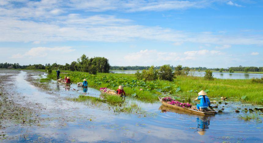 Bauern rudern durch die überfluteten Lotusblumenfelder