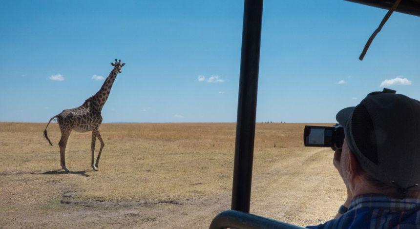 Blick vom Geländewagen auf eine vorbeilaufende Giraffe