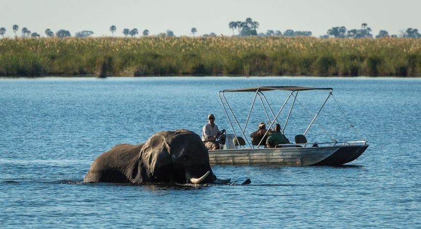 Boot passiert badenden Elefanten