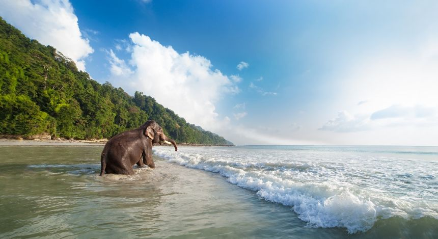 Radhanagar Beach at the Andamans, India