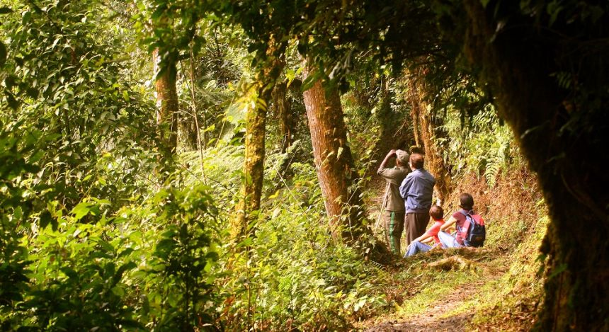 Birdwatching tours in Rwandan forests