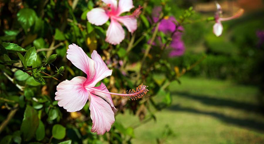 Blumen blühen im botanischen Garten von Chian Rai