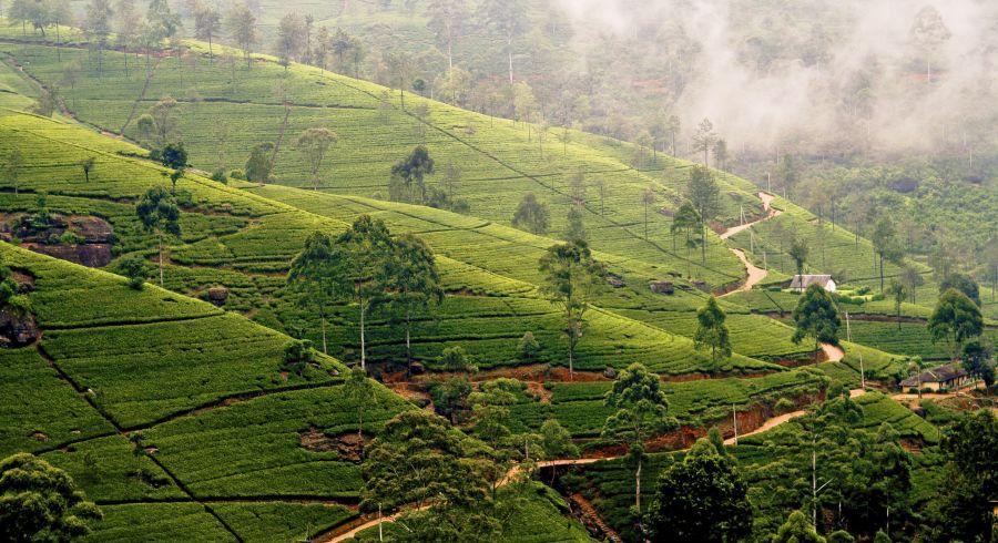 Beste Reisezeit Sri Lanka - Nebel in den Hügeln von Nuwara