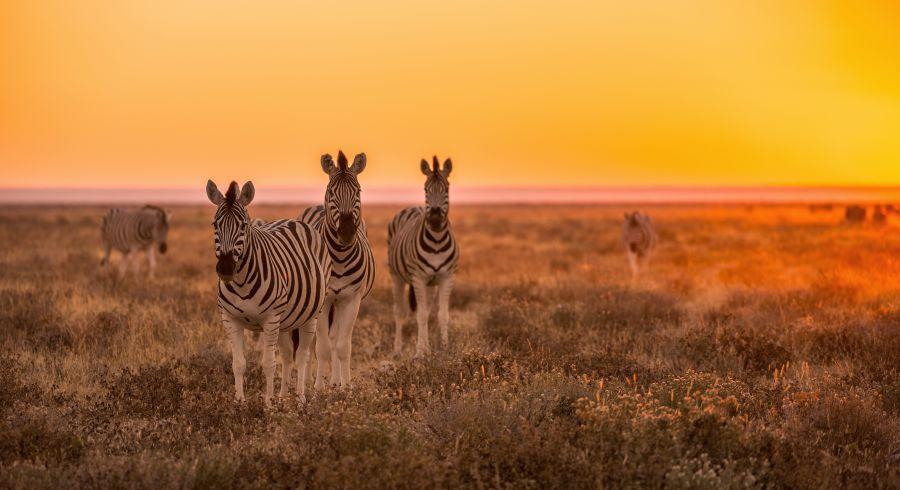 Beste Reisezeit Namibia - Auf Namibia Safaris Zebras sichten