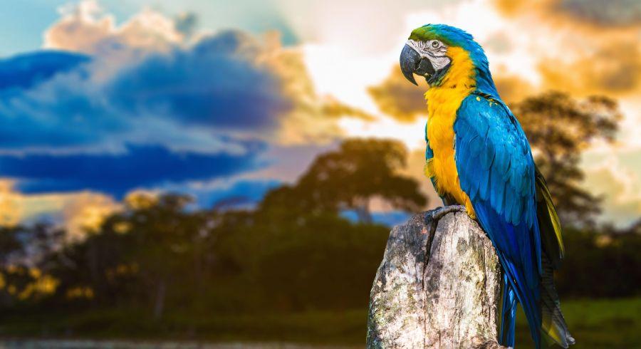 Auf einer Brasilien Rundreise begegnen Ihnen viele exotische Tiere, zum Beispiel auch Papageien