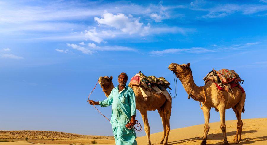 Kamele beim Jaisalmer Wüstenfest
