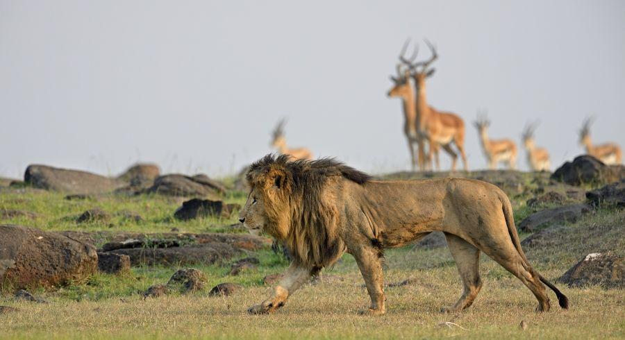 The Best Ever Luxury Safari Tours in Zimbabwe