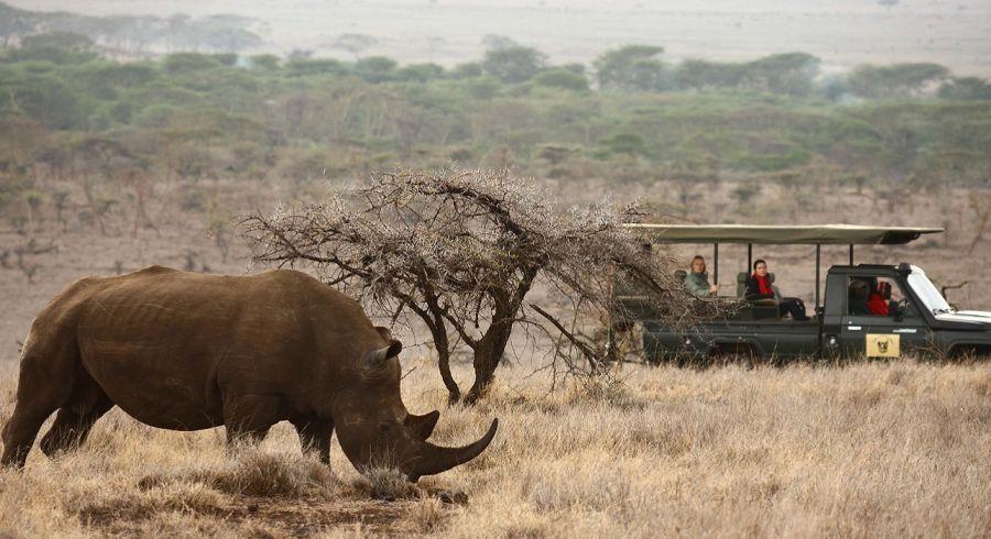 Enchanting Travels - Kenya Tours - Laikipia - Lewa Safari Camp - Wildlife Game Drive White Rhino