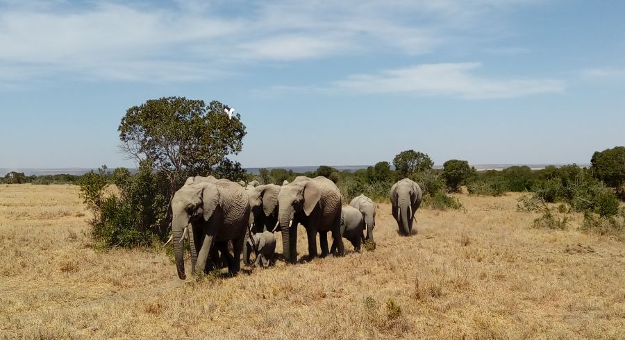 Elefanten im Meru Nationalpark