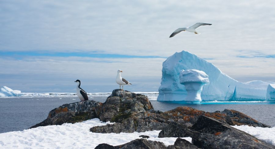Beautiful Antarctic landscape with glaciers and bird in sky
