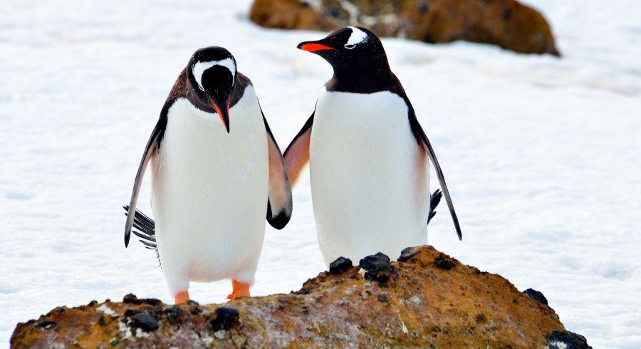 Enchanting Travels Antarctica Tours Antarctica, penguins Let's be friends