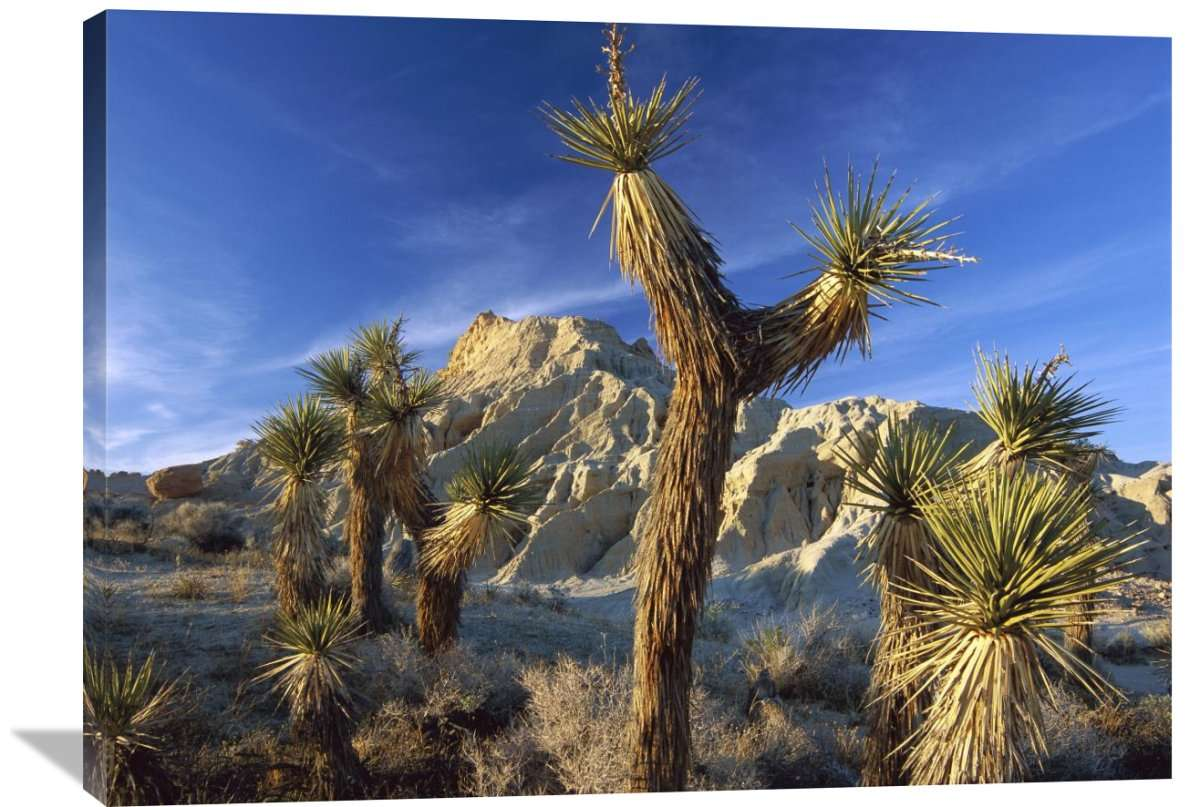 Joshua Trees In Red Rock Canyon State Park, California