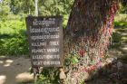 Tree with Colorful Bands on Tt in Killing Fields in Phnom Penh
