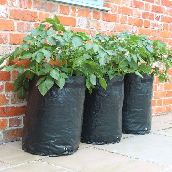 Potato Patio Planter from Haxnicks