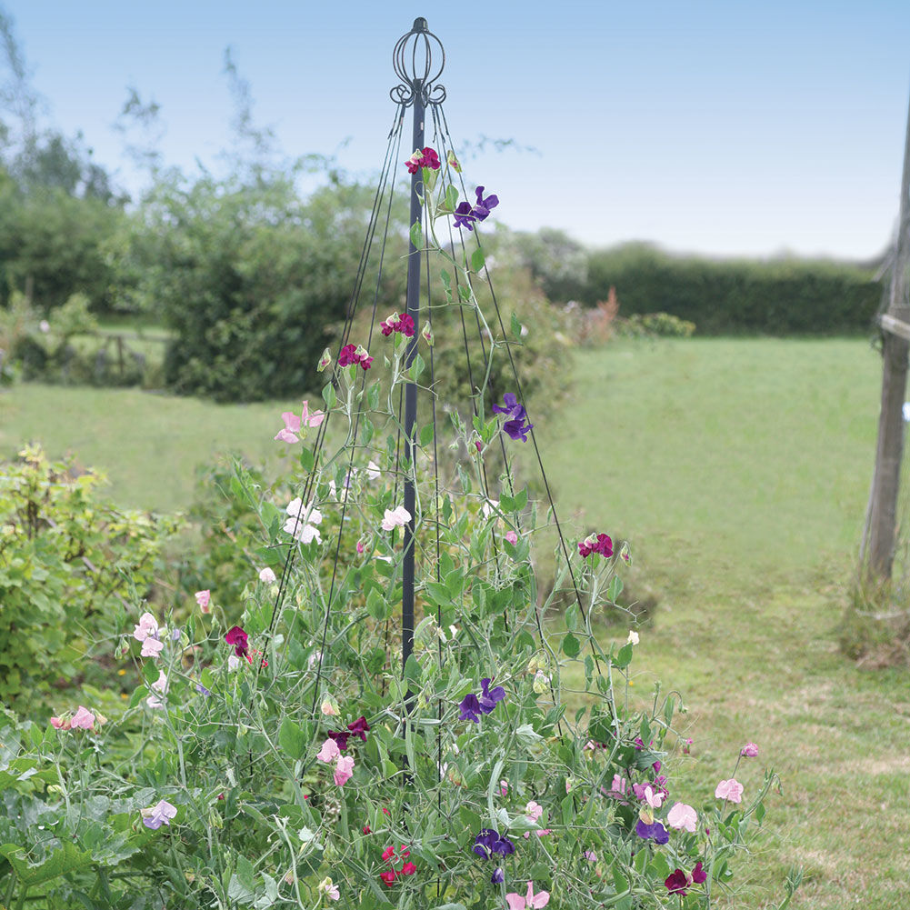 20 Black Flowers And Plants To Add Drama To Your Garden: Garden Maypole