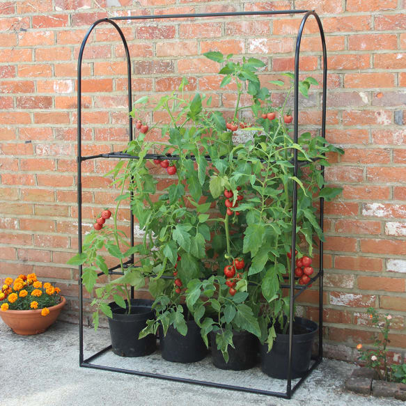 Tomato Crop-Booster Frame from Haxnicks