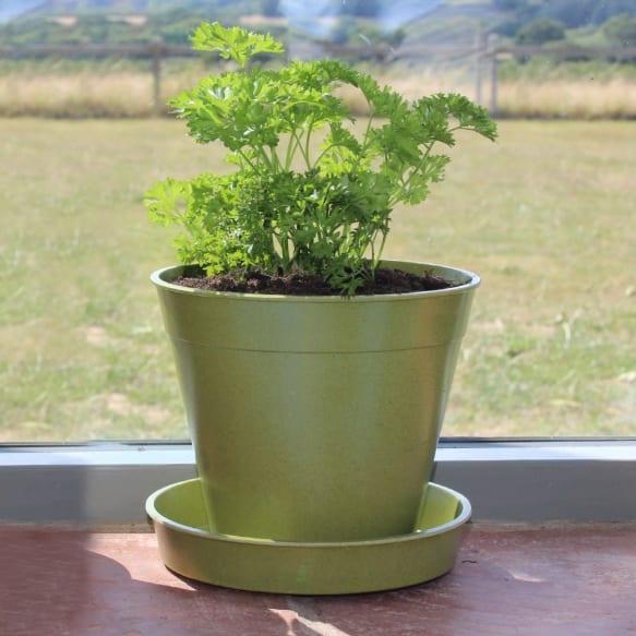 """6"""" Bamboo Pots - Sage Green"""