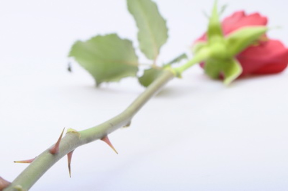 New UK pension freedoms: every rose has a thorn