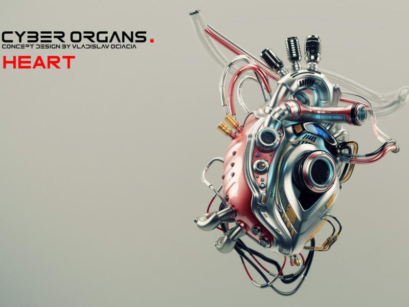 Dissertation: Experimental Organ Transplantation Technologies.