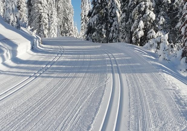 NE Ski Trail Conditions App | skiwise-app.com