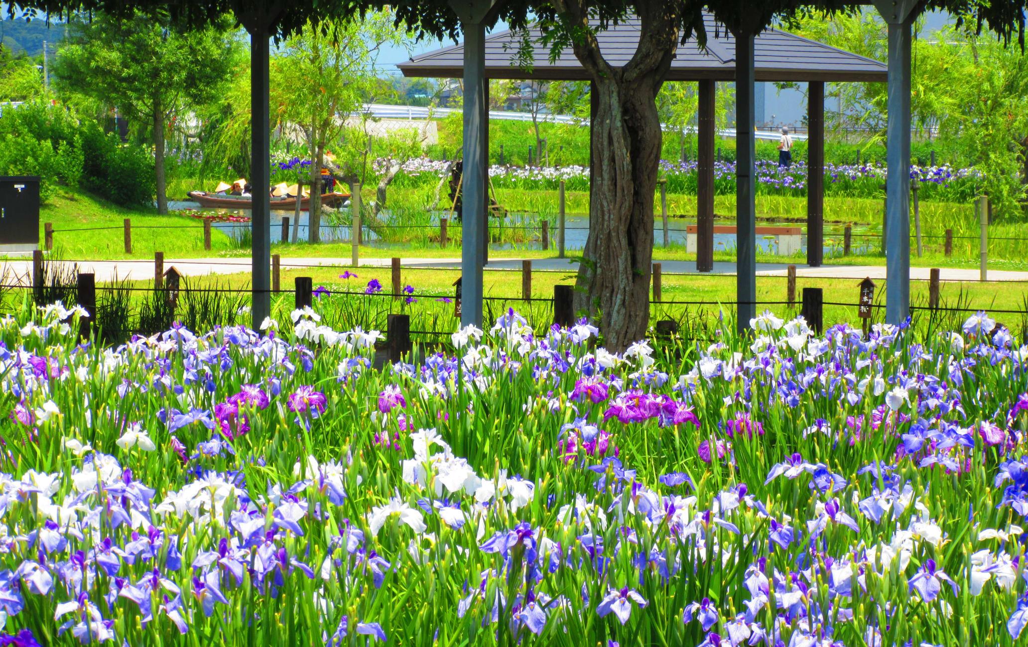 Suigo Sawara Aquatic Botanical Garden