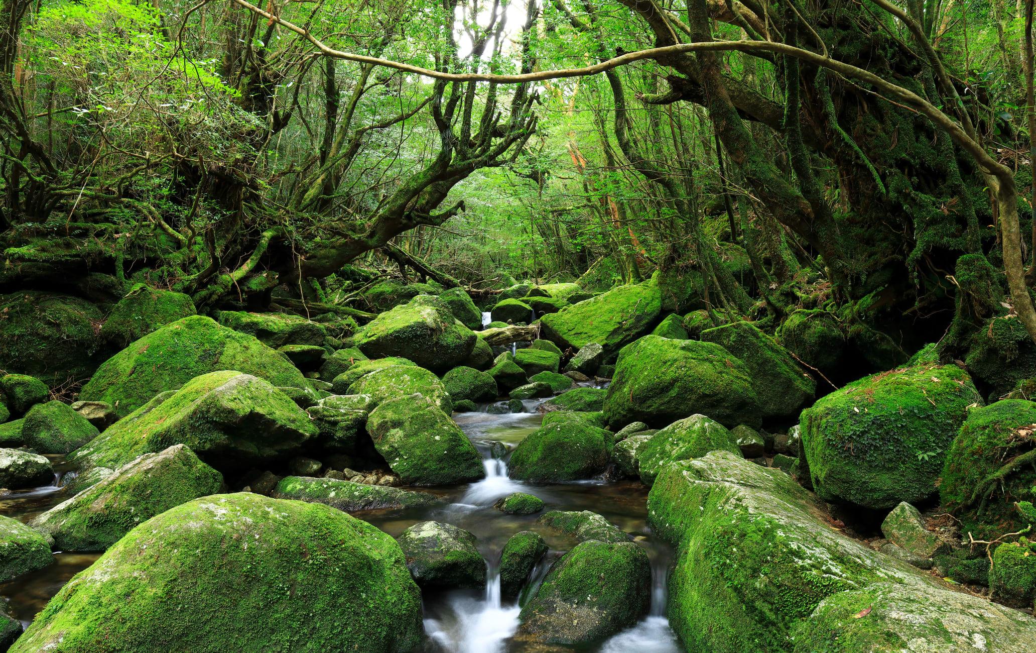 Shiratani Unsuikyo Ravine