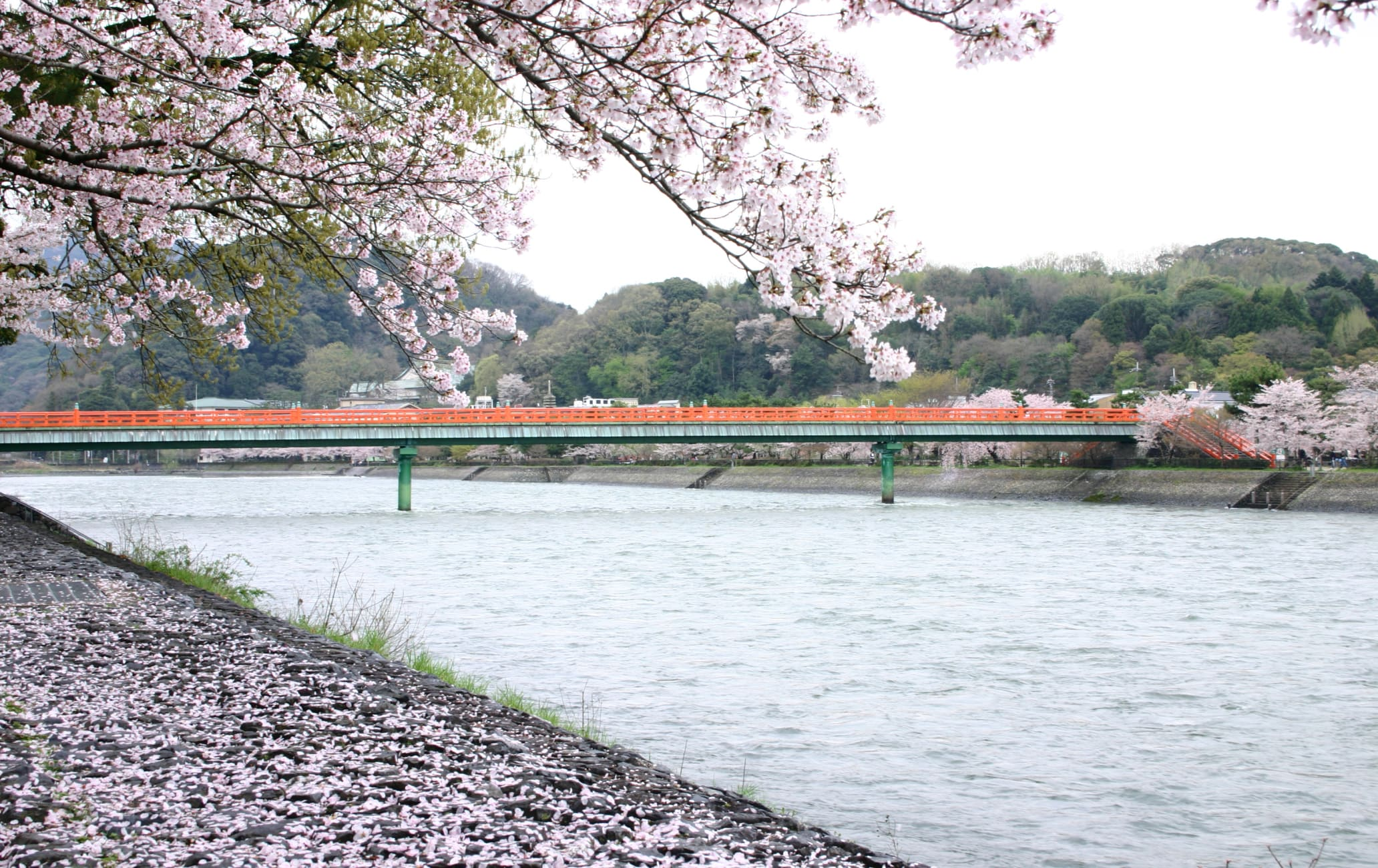 the upper stream of Uji Bridge