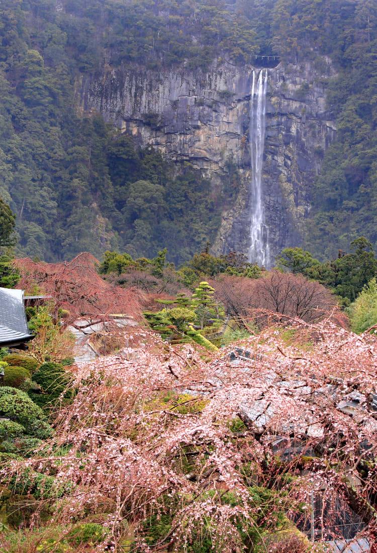 nachi waterfall
