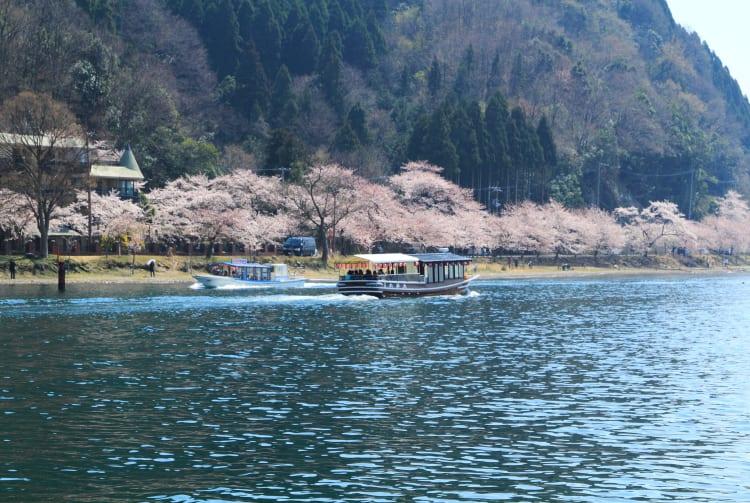 Sakura of Kaizu Osaki