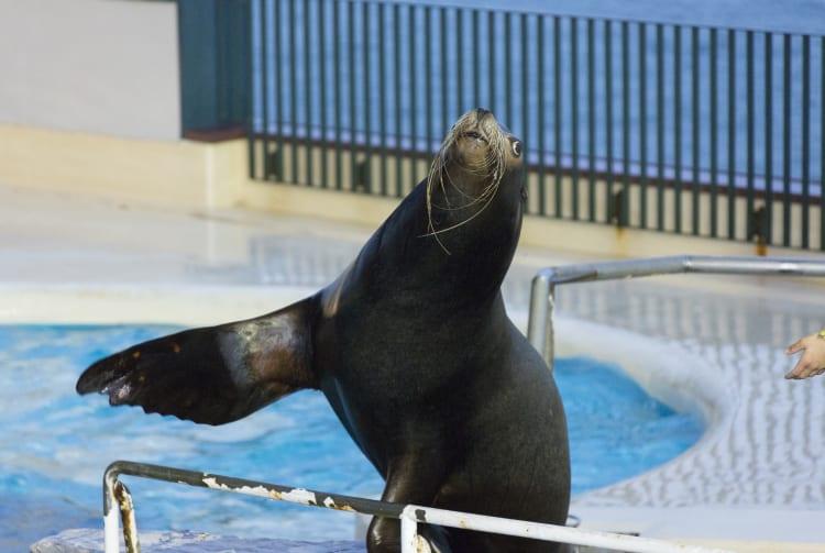 Shimonoseki Kaikyokan -Shimonoseki City Aquarium