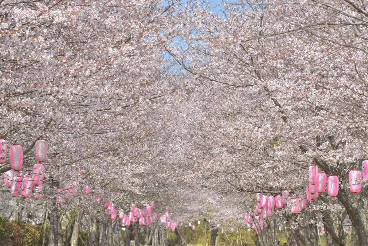 yakushima & tanegashima islands