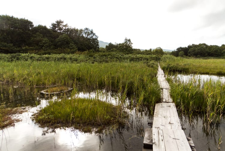 Tashirotai Marshland