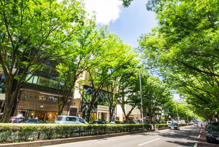 Harajuku & Omotesando & Aoyama Area