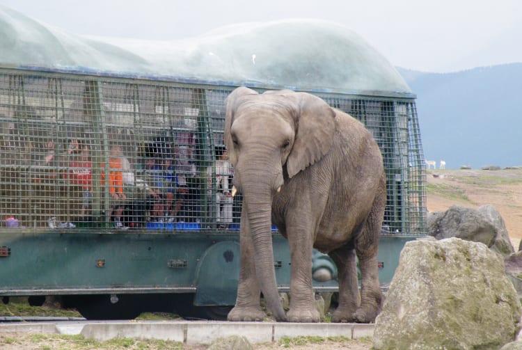 Kyushu Natural Zoological Park African Safari