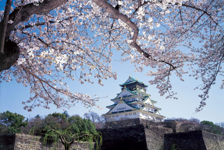 Osaka Castle Park-cherry blossom
