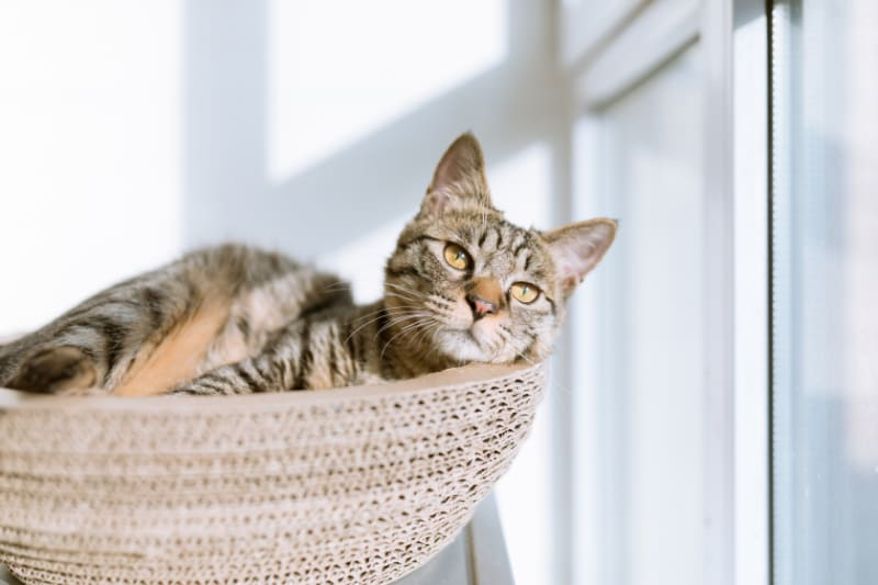 Top 3 Best Selling Cat Scratching Posts