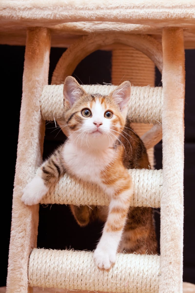 kitten on scratch post with sisal rope