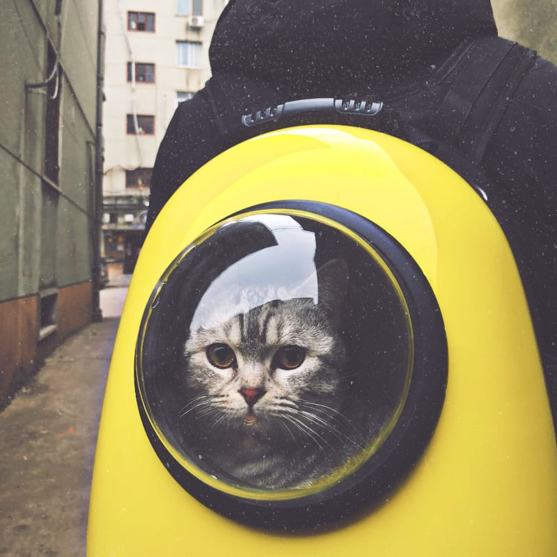 As Seen on TV Cat Products: What to Get Your Paws On